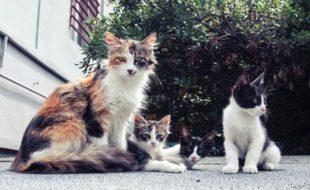 kattefoder